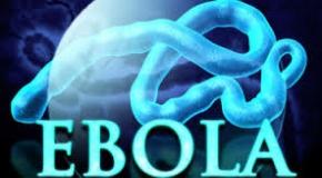 wpid-ebolacure2.jpg